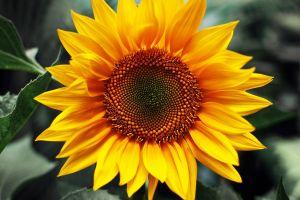 Знижка на кожний другий мішок соняшнику ВНІС -80%