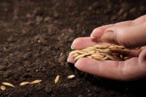 Державна програма фінансової підтримки розвитку фермерських господарств