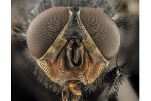Как действуют инсектициды