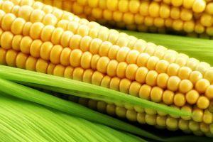 ФАО кукурузы