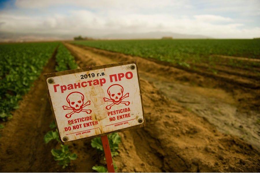 Гранстар ПРО: вы все еще покупаете этот гербицид?>