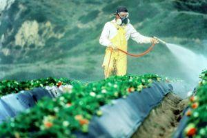 Температурные условия для применения пестицидов