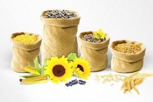 Посевной материал и СЗР: когда и как лучше покупать