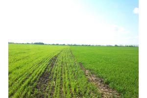Повышение урожайности зерновых культур