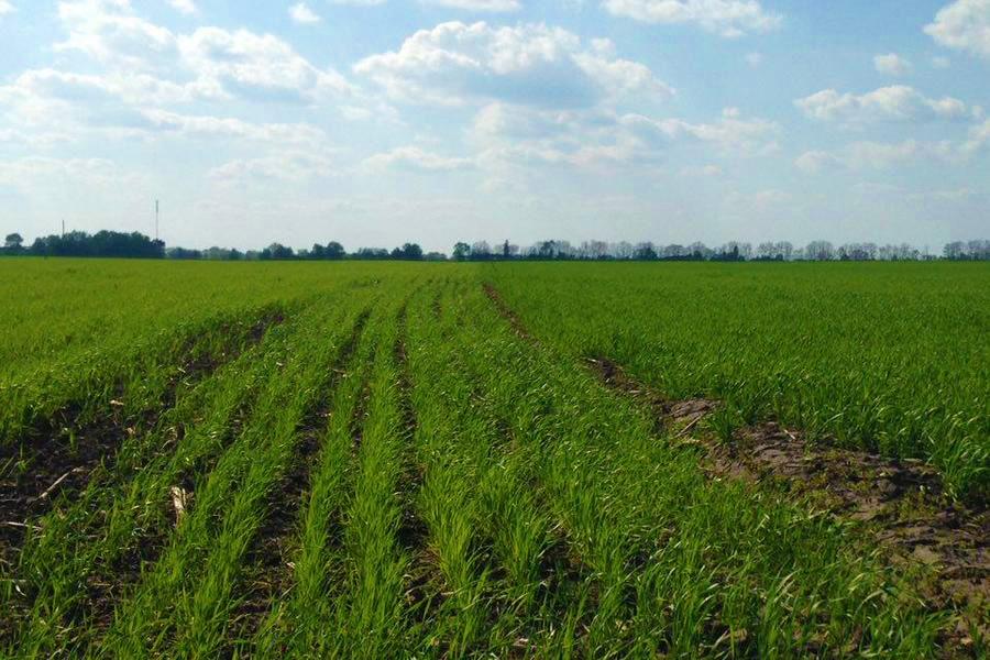 Фитотоксическое последействие гербицидов на агрокультуры>