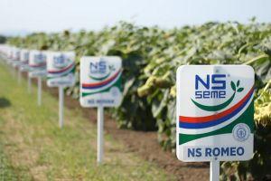 Сербские гибриды подсолнечника на рынке посевмата Украины